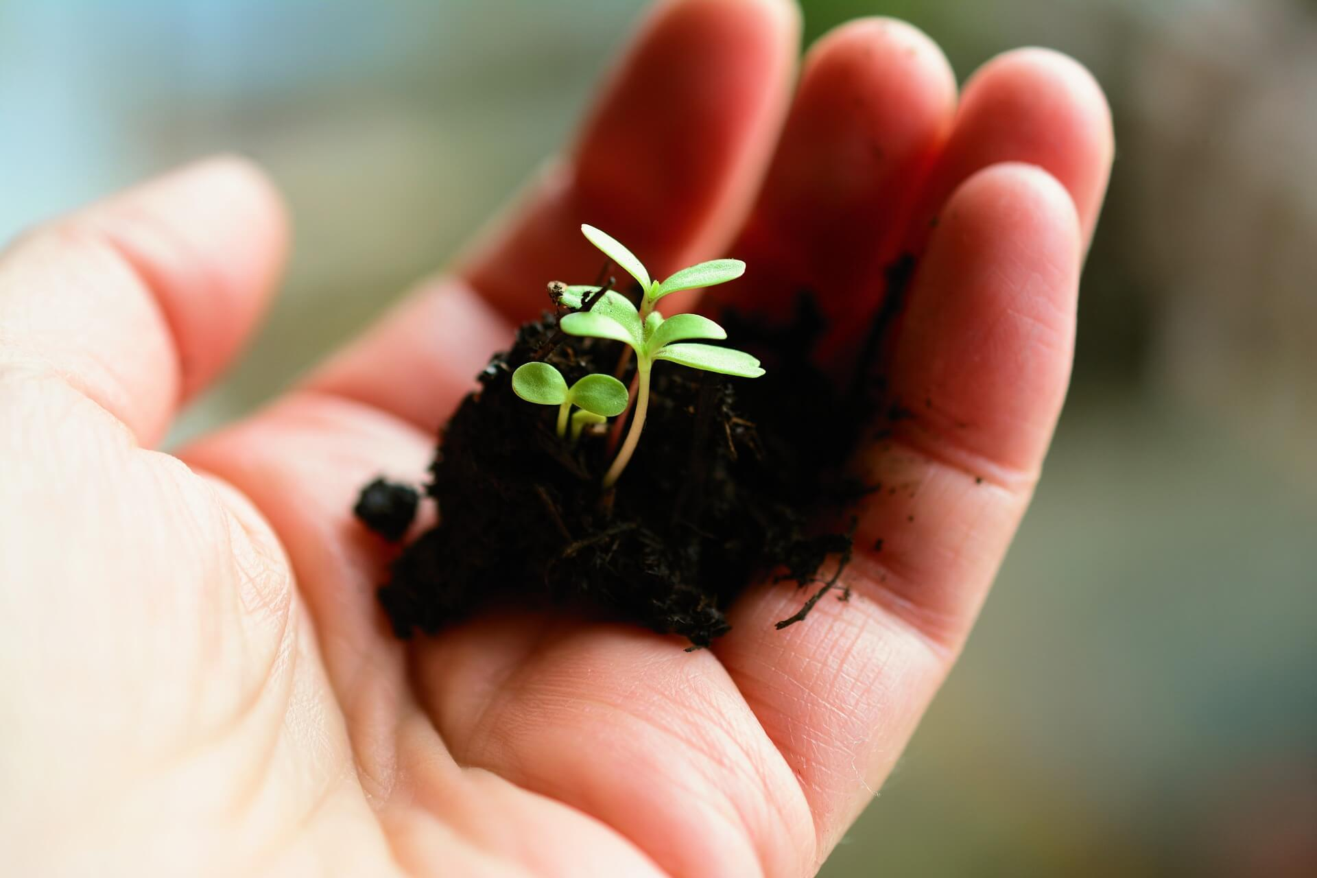 a hand holding a small seedling