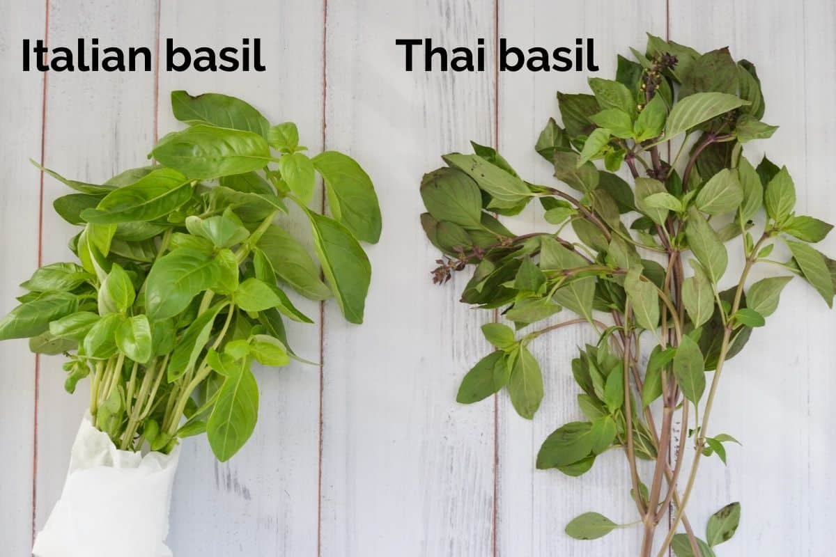 bunches of Thai basil and Italian basil laid out on a white table